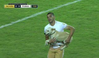 Moment amuzante într-un meci din Copa Libertadores. Un intrus cu patru labe a jonglat pe teren. A vrut să fie al 23-lea jucător, însă fotbaliştii, deloc ospitalieri, nu i-au pasat nicio minge. Nu este clar modul în care câinele şi-a făcut drum pe teren, dar odată ce a ajuns acolo, s-a dat în spectacol! Foto:... Post-ul Driblerul care latră apare prima dată în CANAL 3.