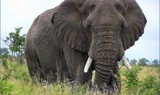 Gurile de scurgere neacoperite sunt o problemă nu doar în Chişinău, dar şi în Sri Lanka. Doar că acolo, în gaura-capcană a nimerit un pui de elefant. Localnicii şi-au unit forţele cu reprezentanţii protecţiei faunei sălbatice pentru a salva micuţul. Operaţiunea a fost migăloasă, pentru că animalul era speriat. După ce a fost scos la... Post-ul Operaţiunea: salvarea elefantului apare prima dată în CANAL 3.
