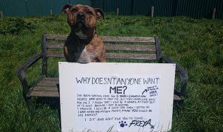 """Soarta tristă a unui câine epileptic din Marea Britanie s-a schimbat peste noapte. Freya, supranumit """"cel mai singuratic câine din lume"""" pentru că a petrecut toată viaţa în adăpost, fiind respins de potențiali stăpâni de peste 18.000 de ori, a fost ales să joace într-un film alături de Anthony Hopkins. Povestea parcă inspirată din """"Cenușăreasa""""... Post-ul Cel mai singuratic câine din lume apare prima dată în CANAL 3."""